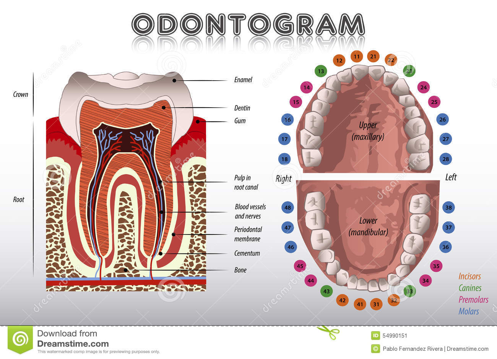 Odontogram Tanddiagram