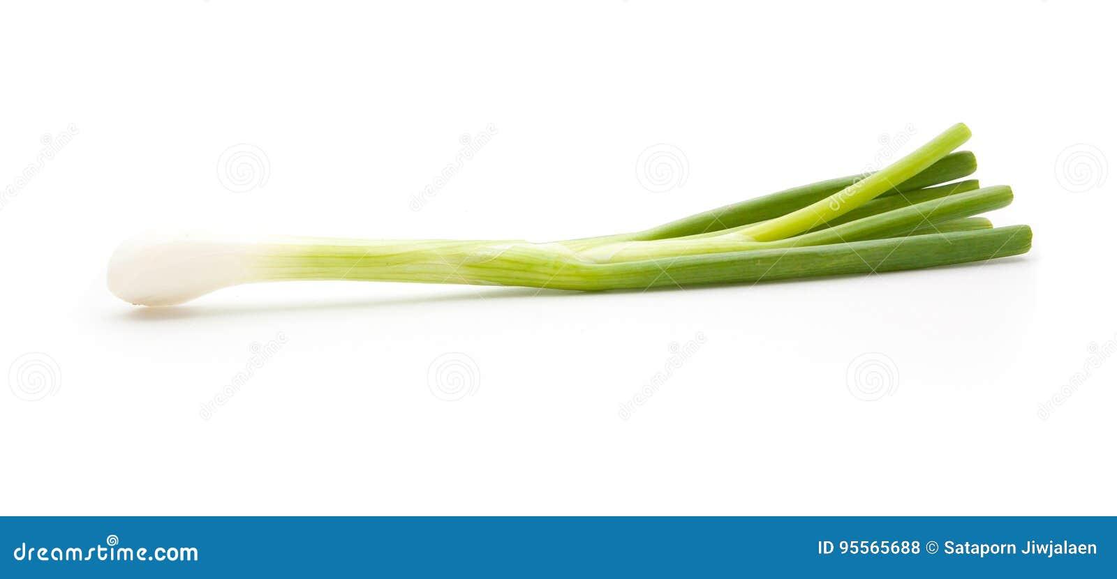 Odosobniona zieleni cebula