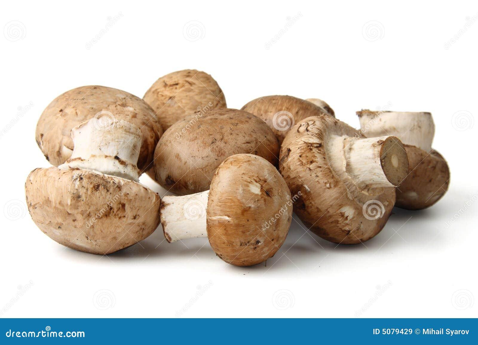 Odosobnione grzyby