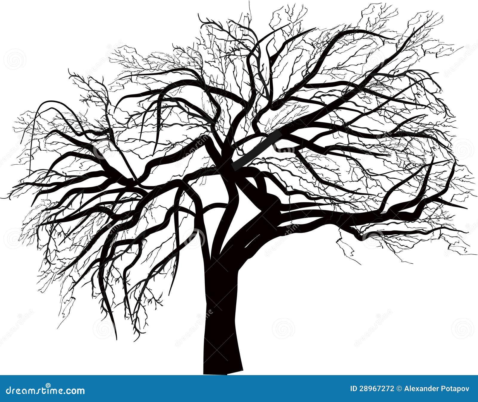 Odosobnionej ampuły naga drzewna ilustracja