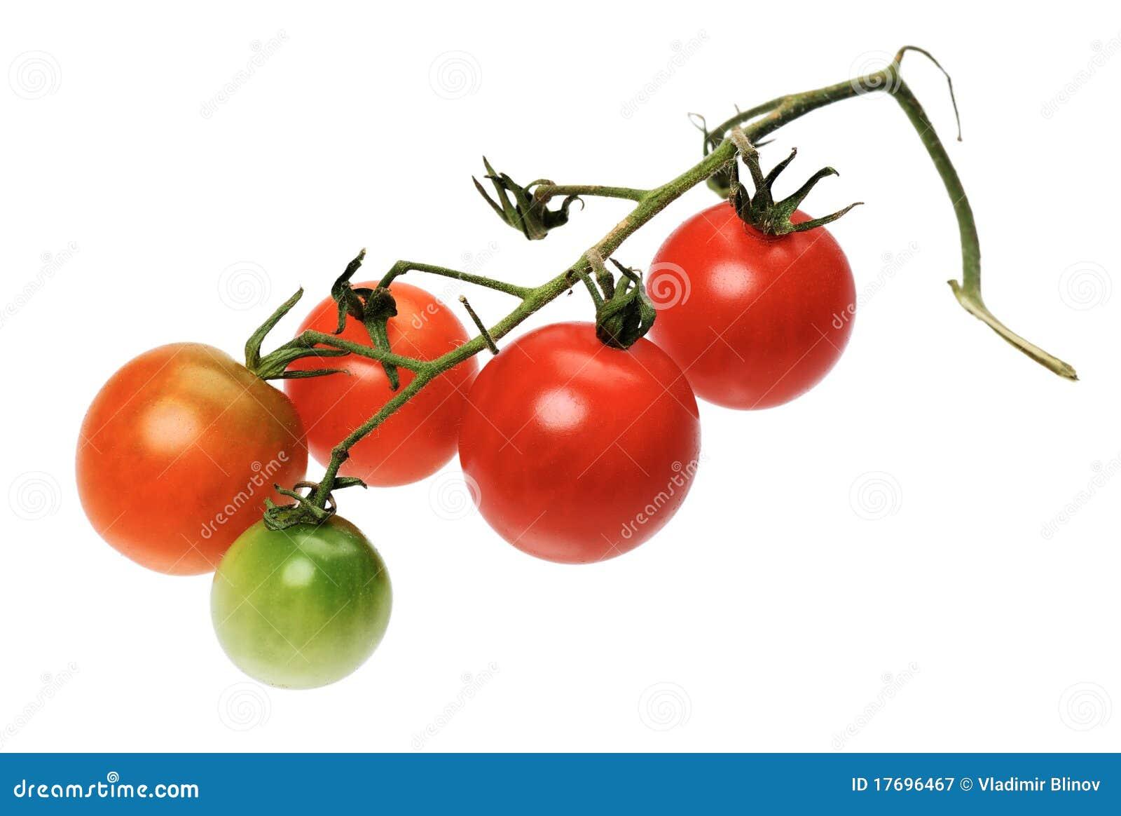 Odosobniony czerwony tomatto