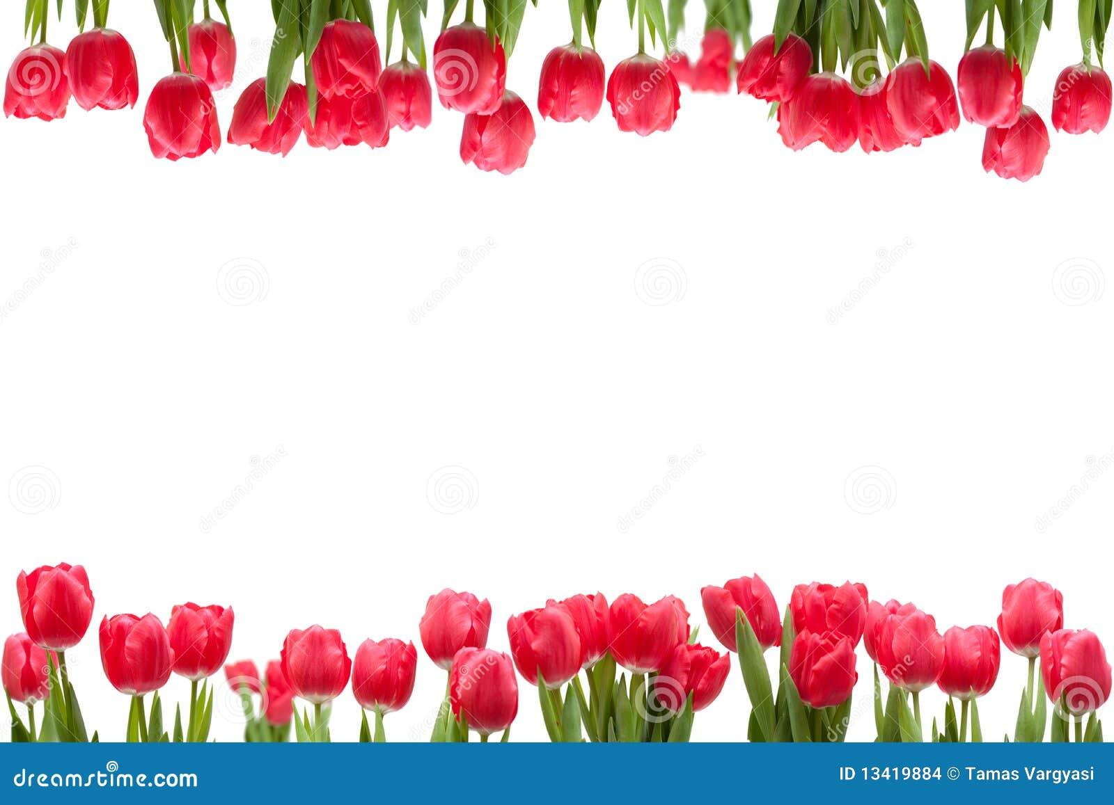 Odosobniony rama tulipan