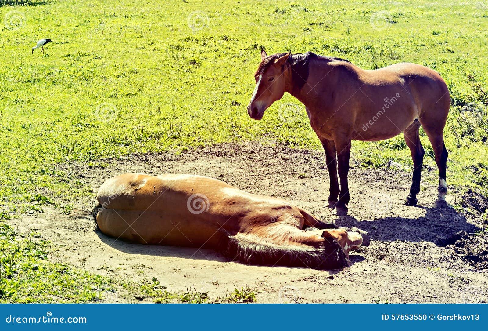 Odpocząć koni
