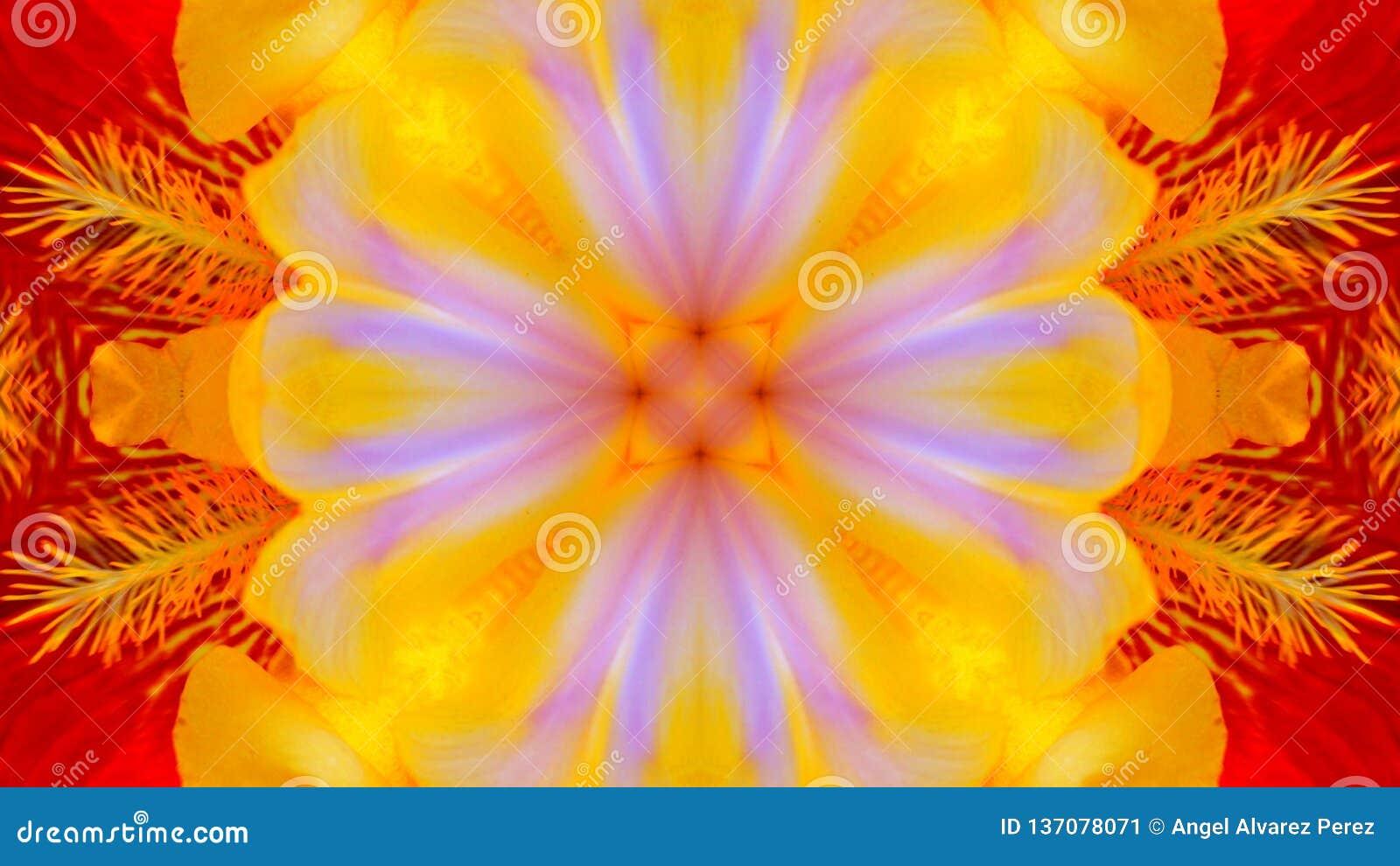 Odzwierciedlający skutek irysowy kwiat