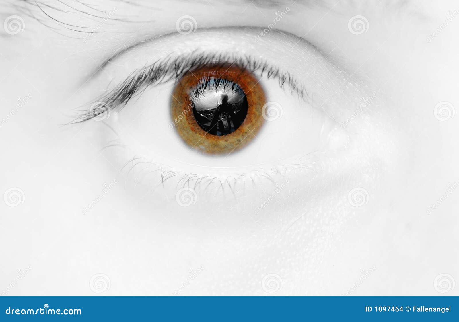 Oeil de Brown