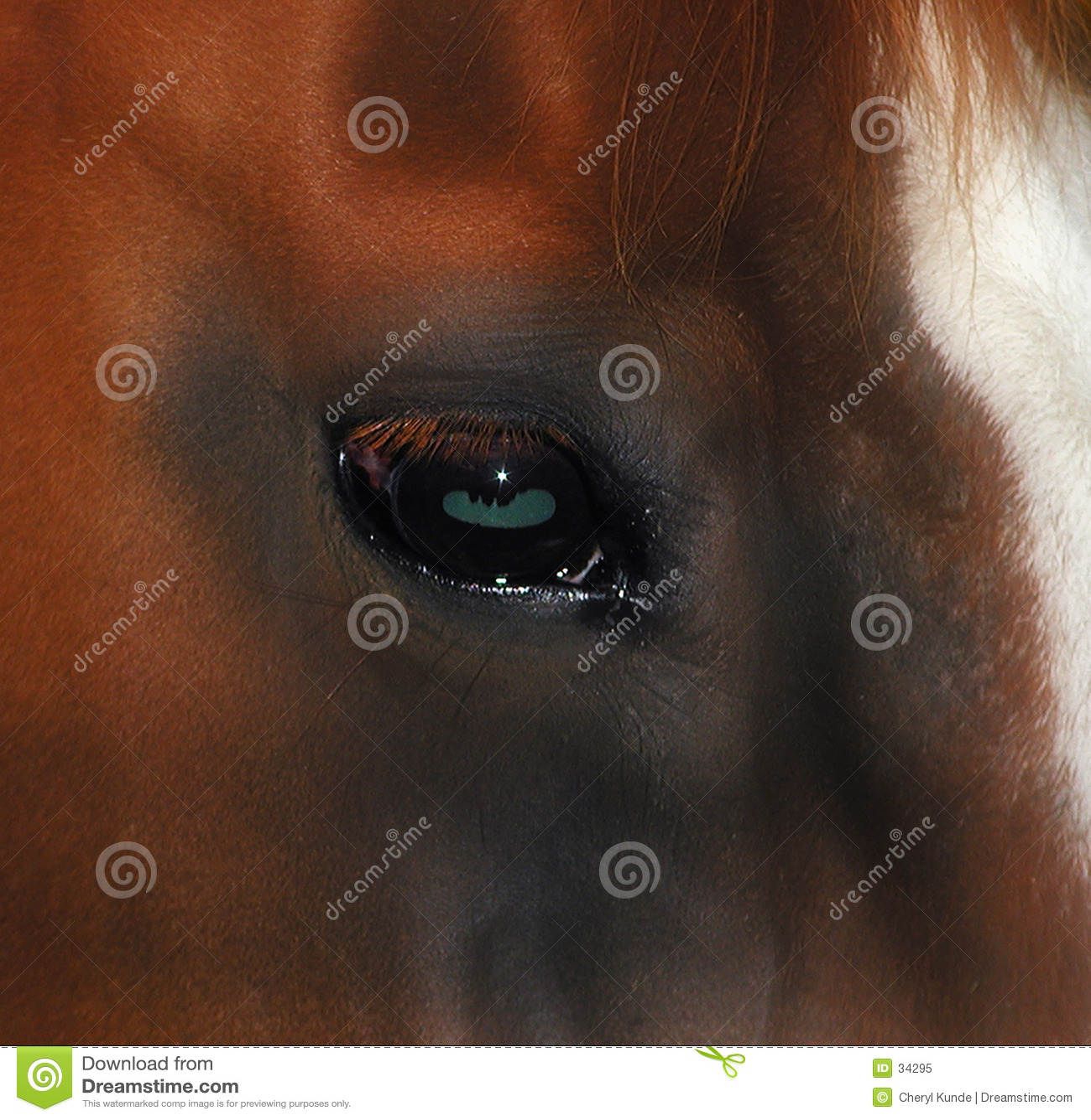 Oeil de chevaux