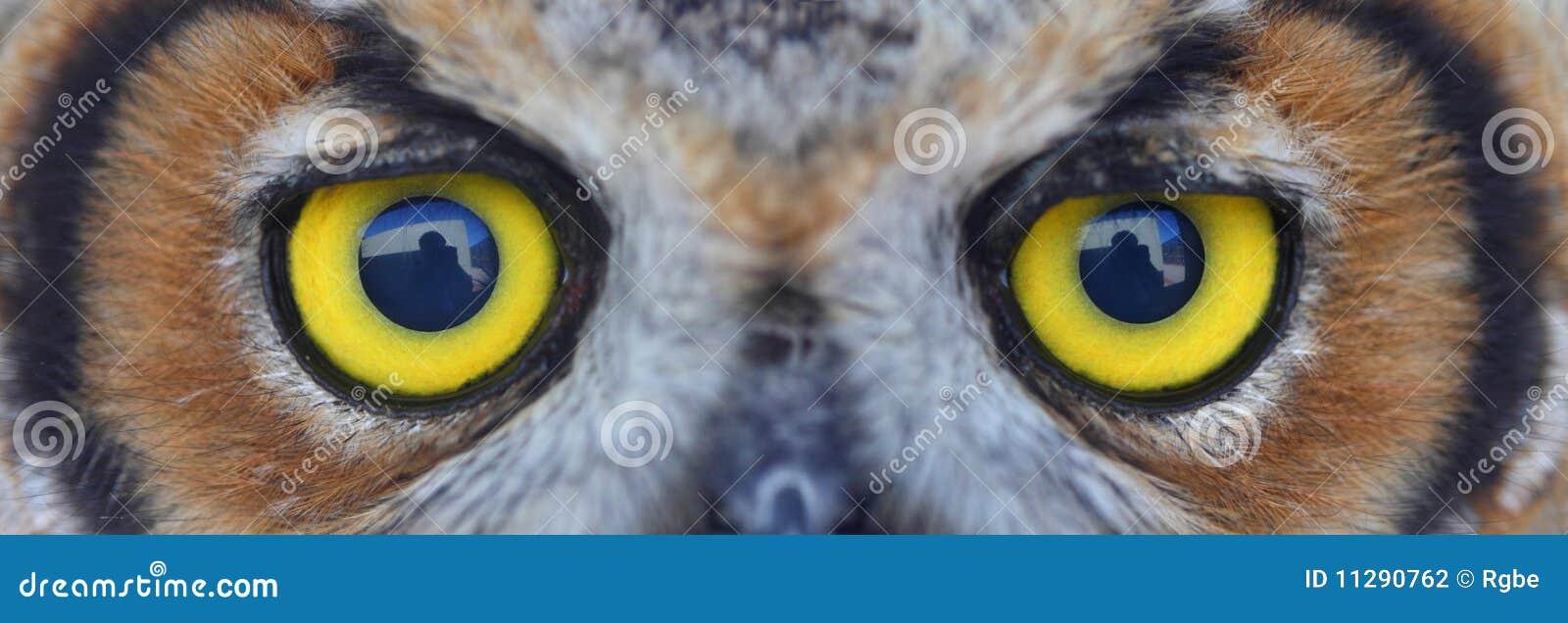 Oeil de hibou
