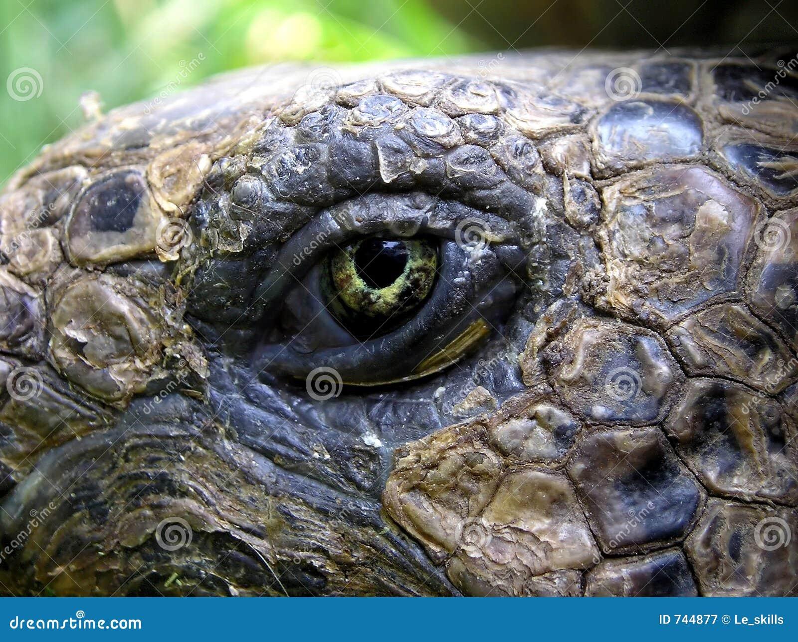 Oeil de la tortue
