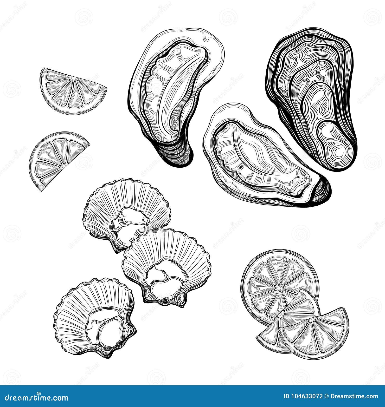 Download Oester, Overzeese Kammossel Zeevruchten Vector Illustratie - Illustratie bestaande uit lijn, inzameling: 104633072