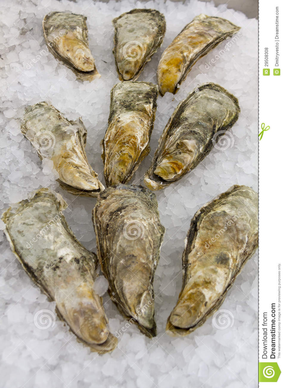 Oesters in ijs