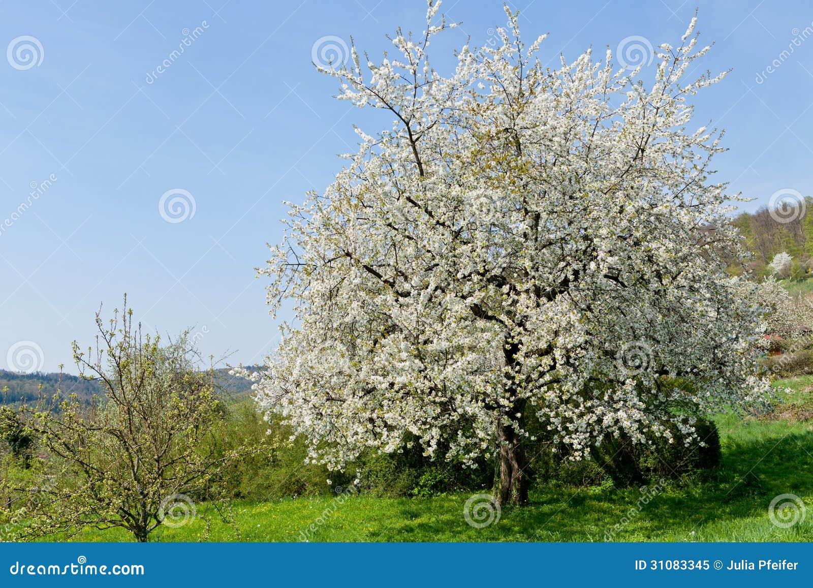 Oeuf d 39 easte et arbre de forsythia au printemps ext rieur for De l arbre au meuble