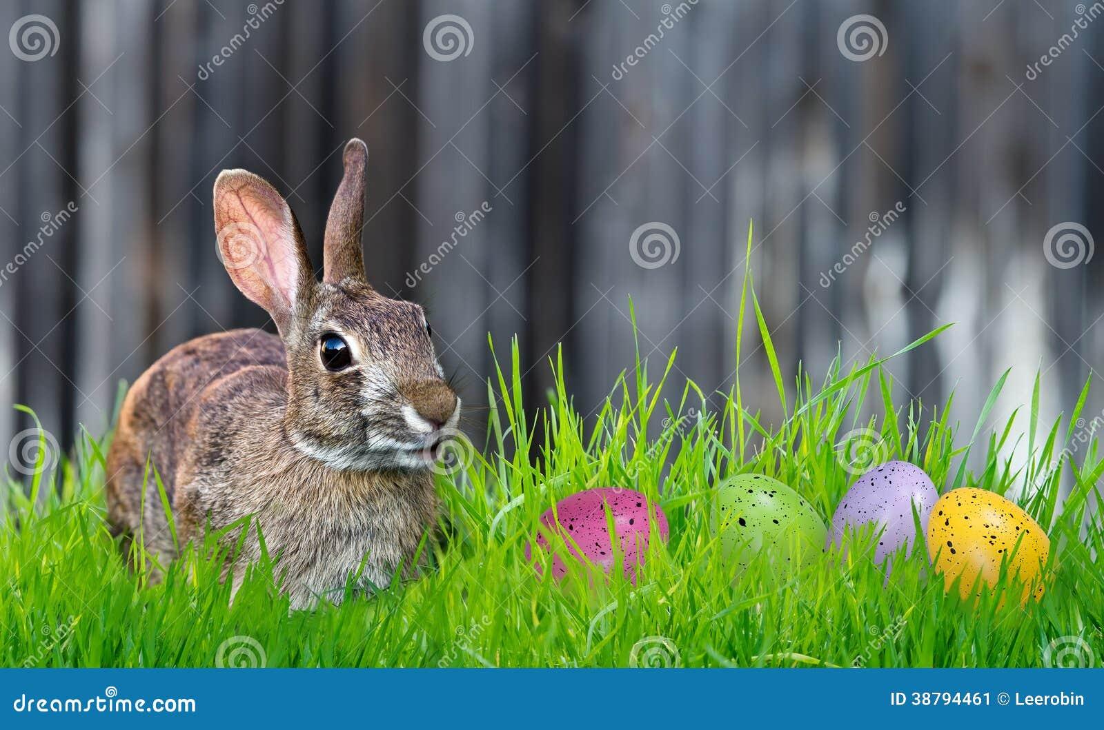 Oeufs de lapin et de pâques