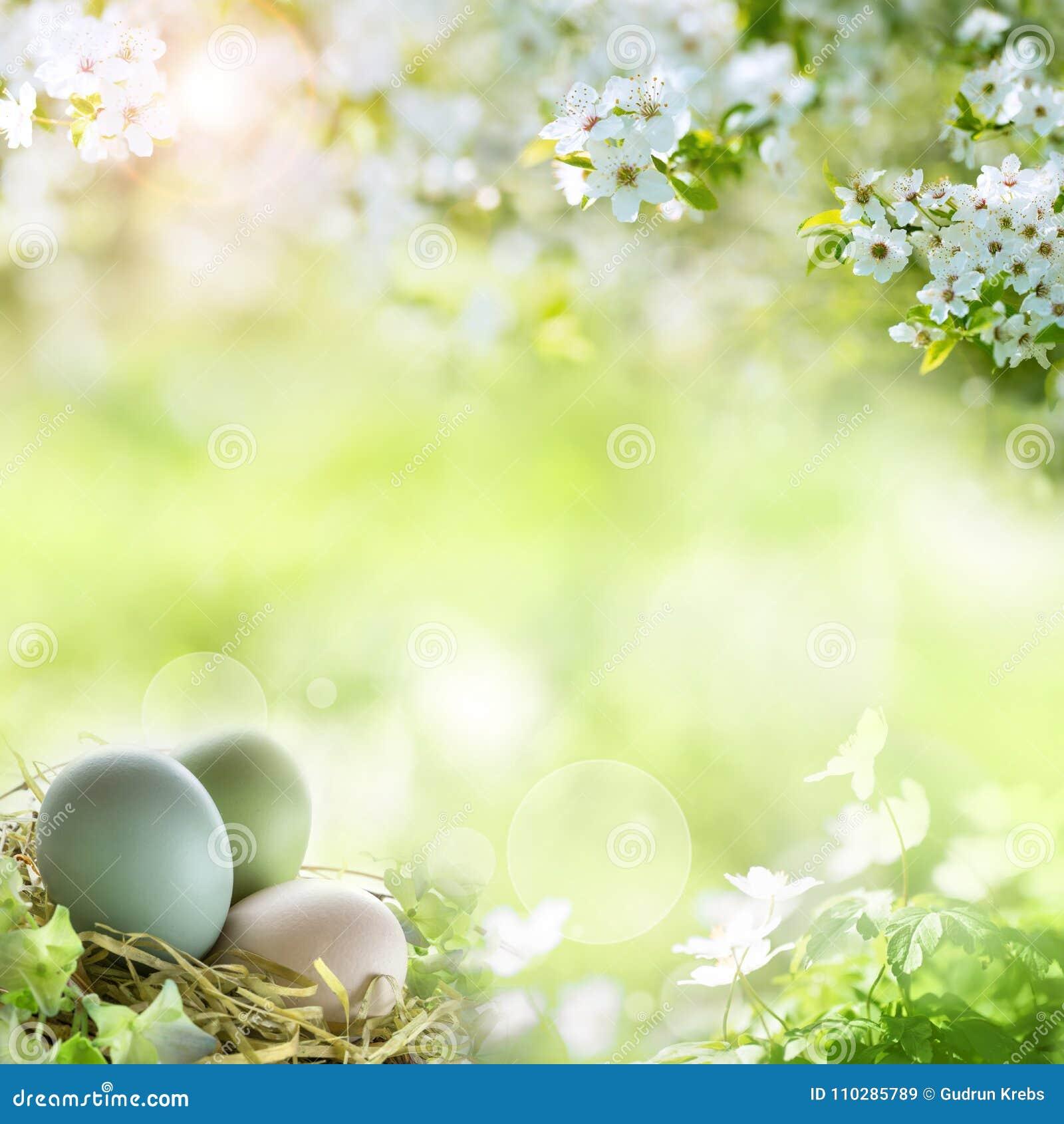 Oeufs de pâques avec des fleurs de ressort