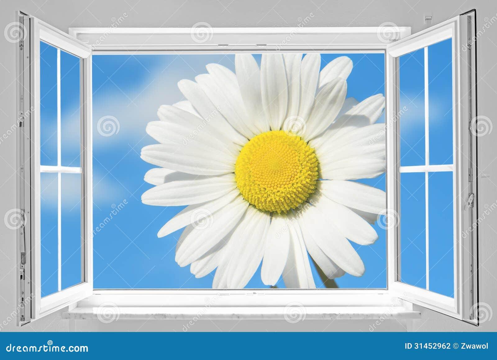 Offenes fenster himmel  Offenes Fenster Mit Gänseblümchen Stockfotografie - Bild: 31452962
