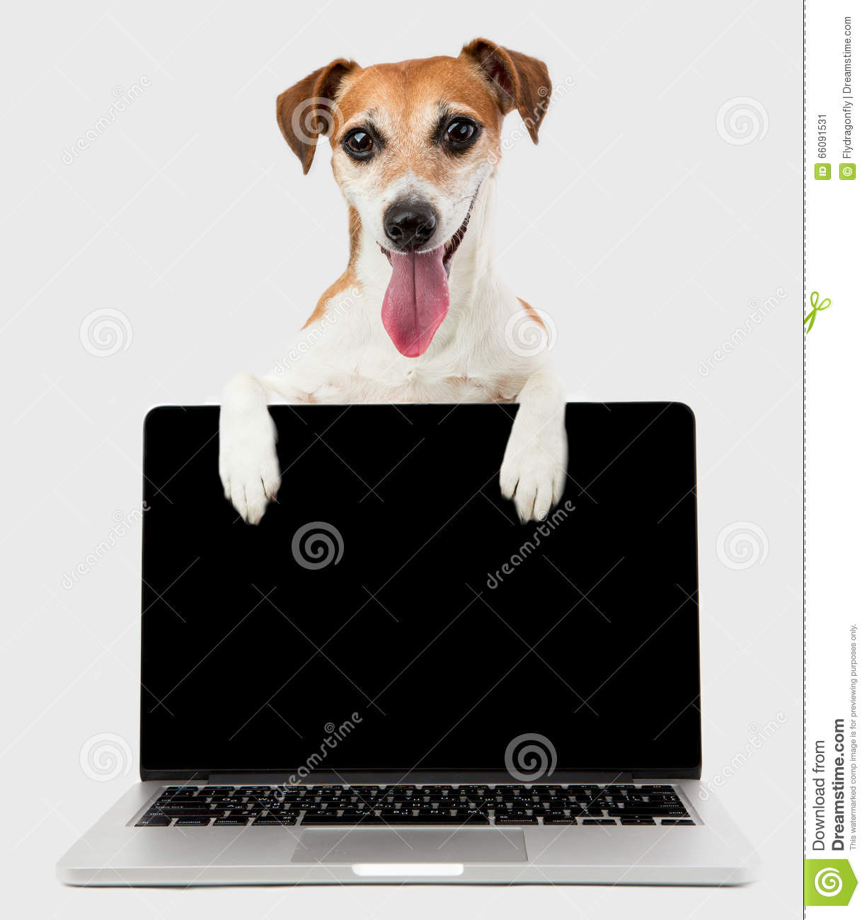 Office Manager Dog With Black Screen Laptop Computer Stock Image ...