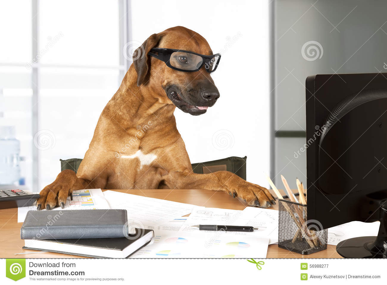 dog sitting at a desk in front of a computer as an office manager