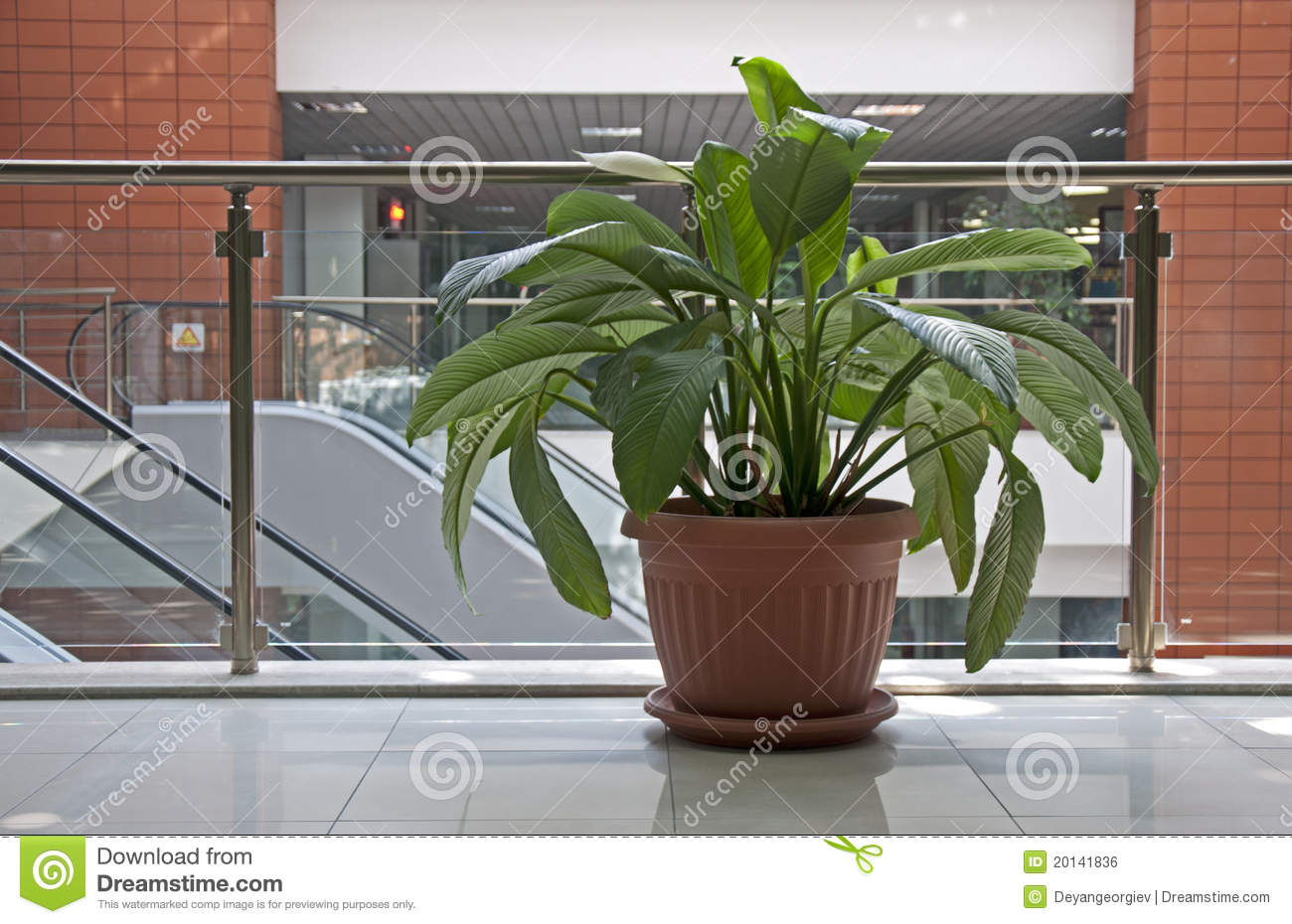 office plants royalty free stock image image 20141836