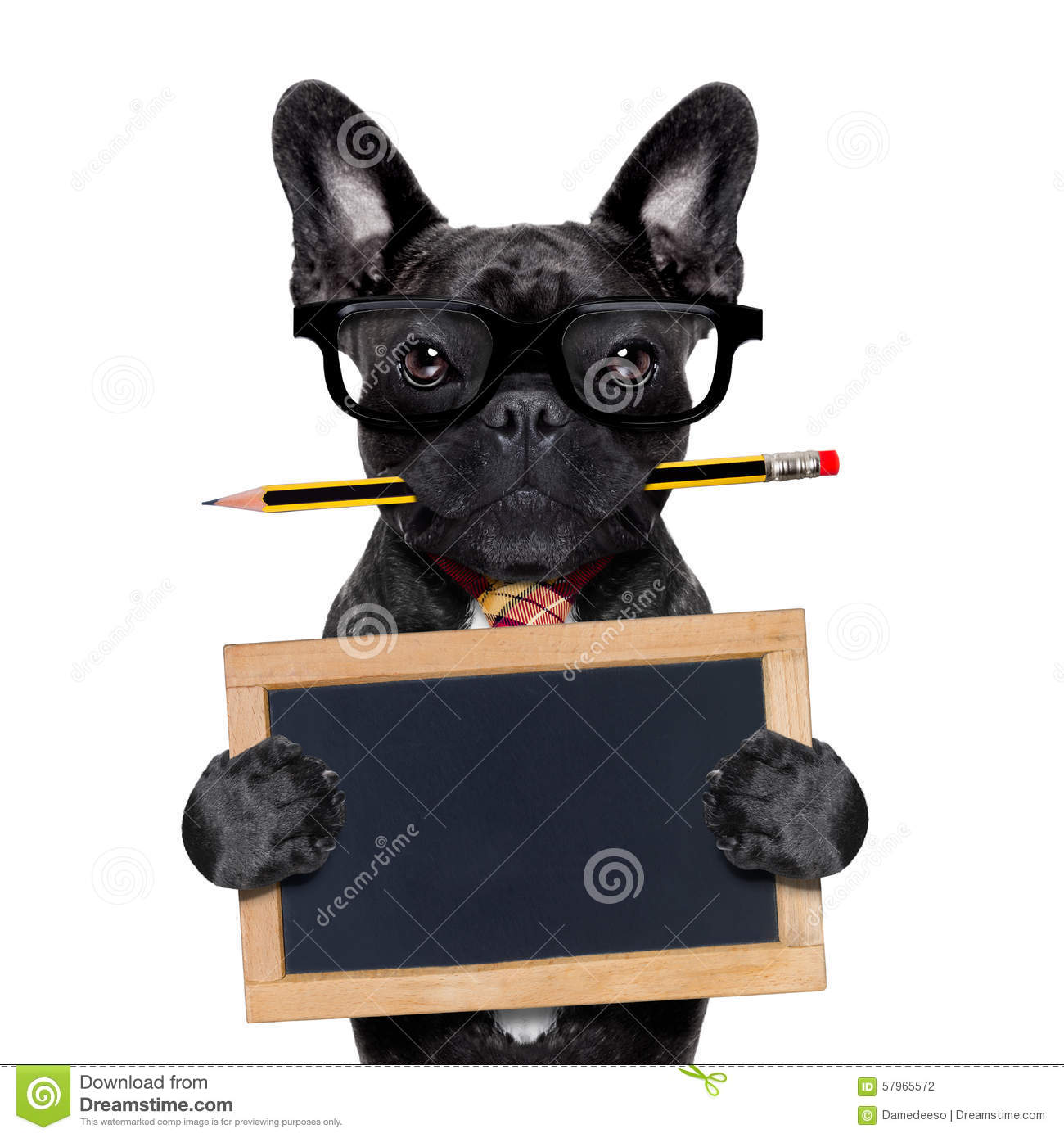 Office Worker Dog Stock Photo Image 57965572