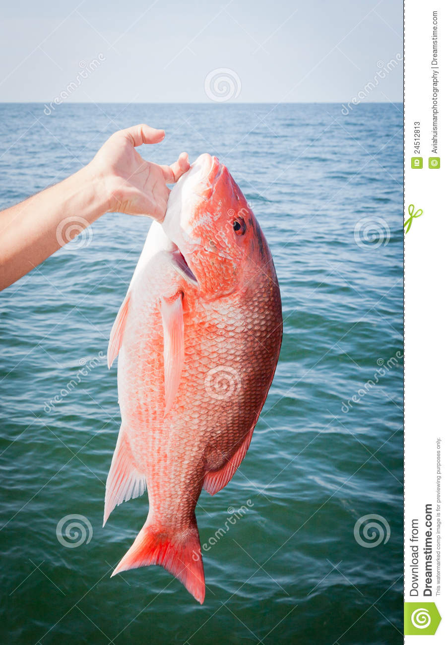 Offshore sport fishing red snapper stock photos image for Red snapper fishing