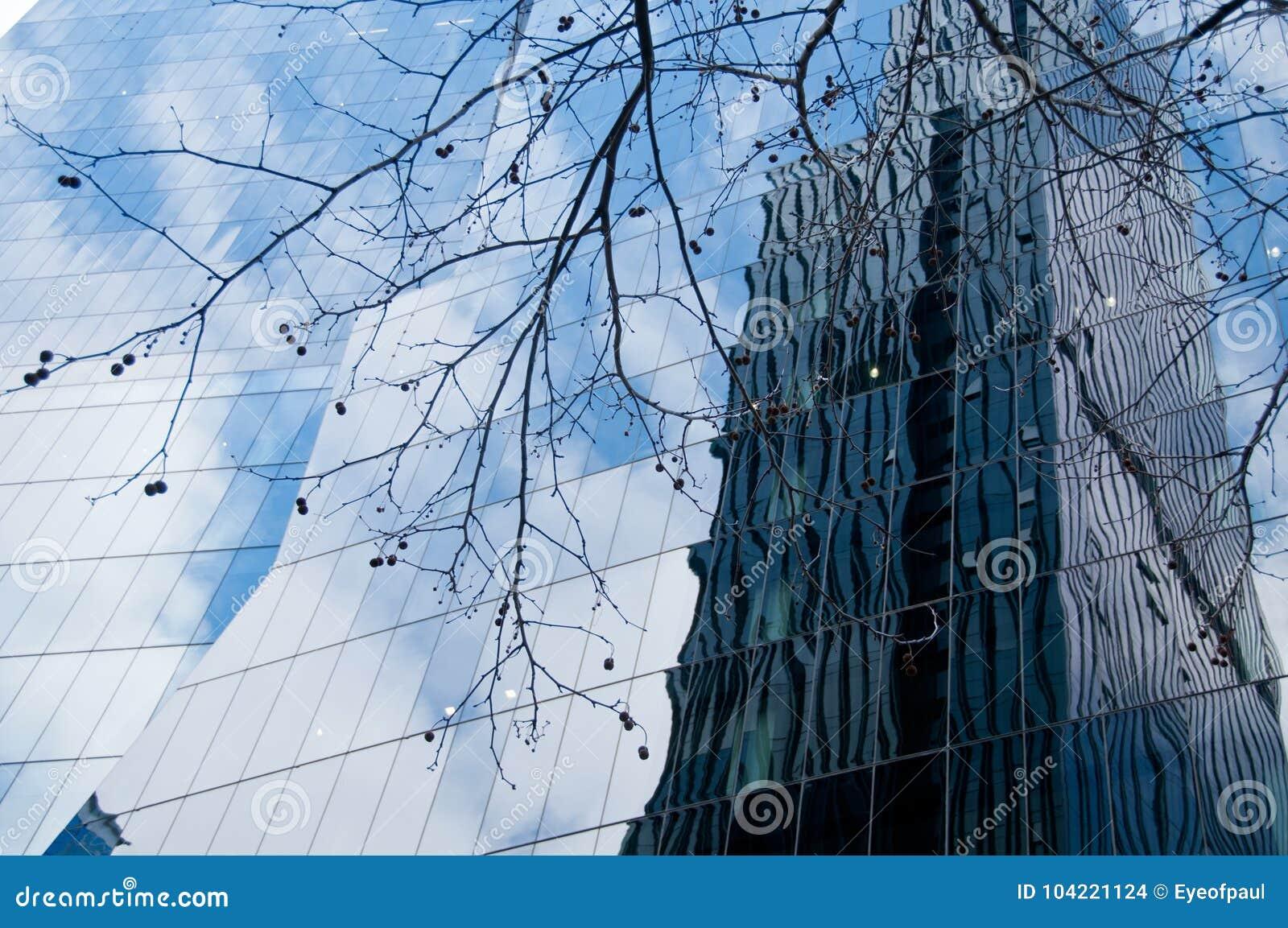 Oficina de moda moderna de la corporación con la rama de árbol secada