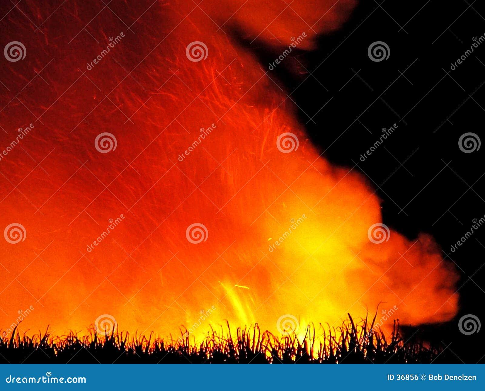 Ogień trzcinowy zbiory pre cukru