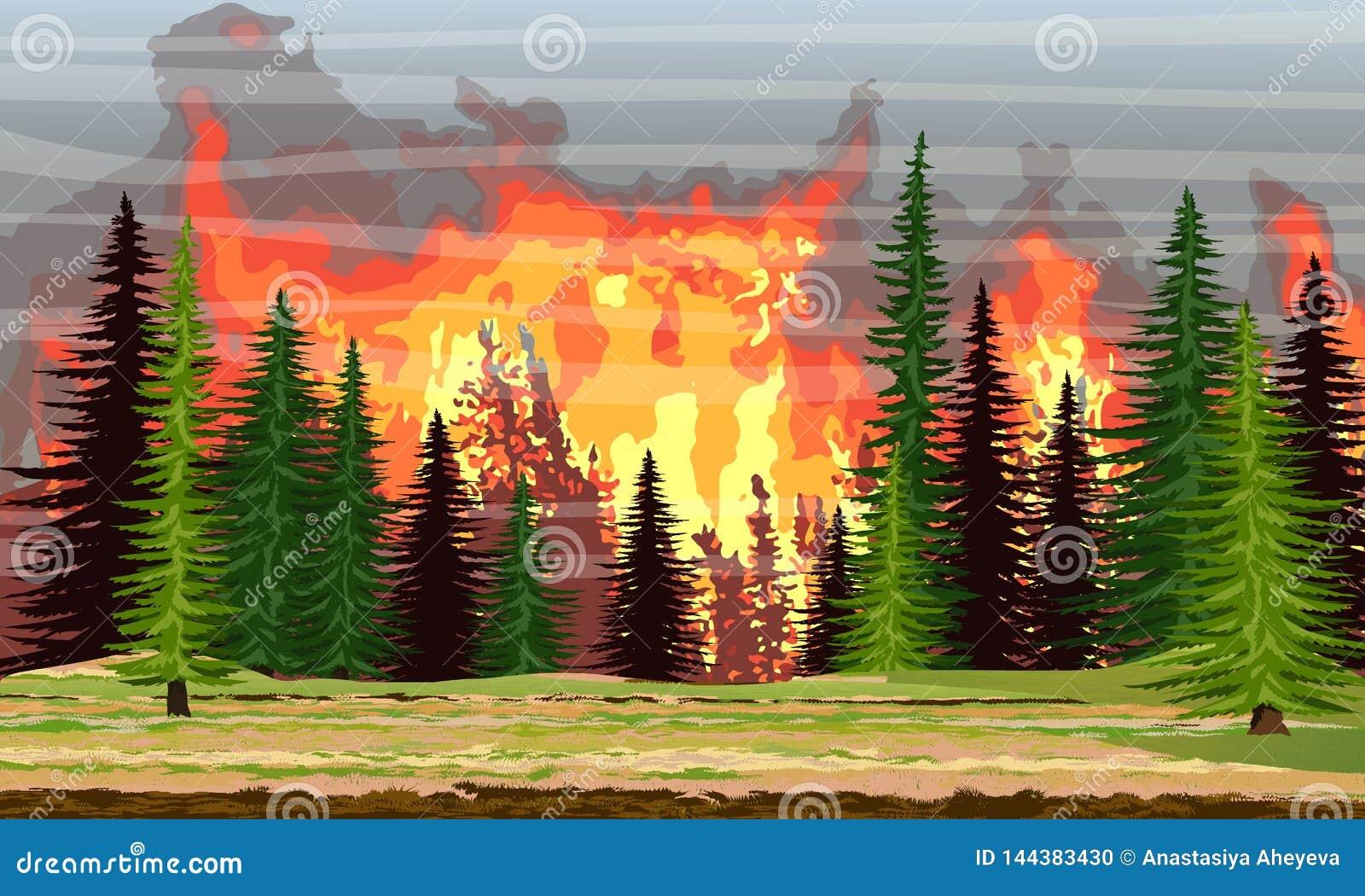 Ogień w świerkowych lasowych Płonących drzewach pożar katastrofa