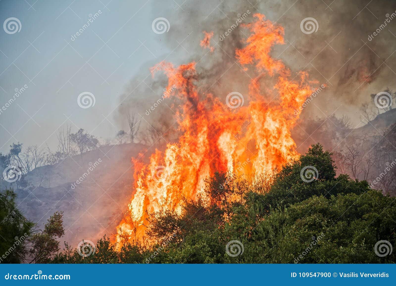 Ogień w sosnowym lesie w Kassandra,