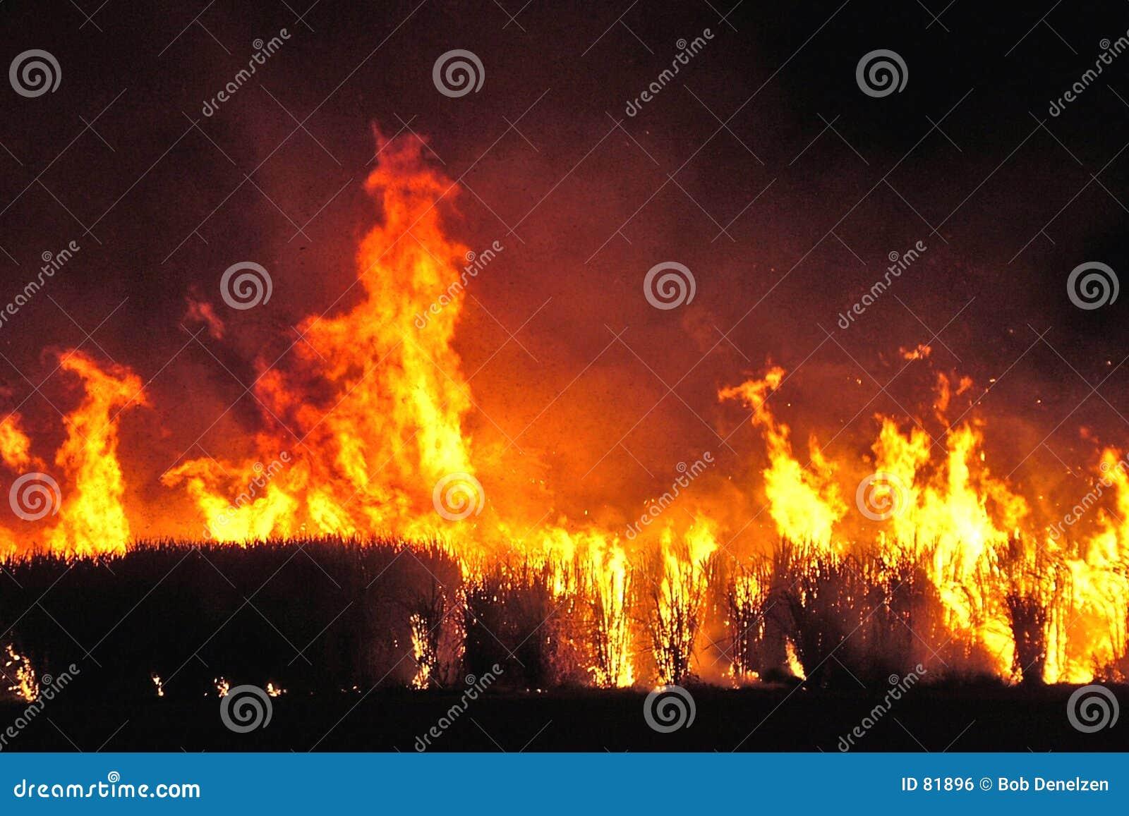 Ogień trzcinowy cukru,