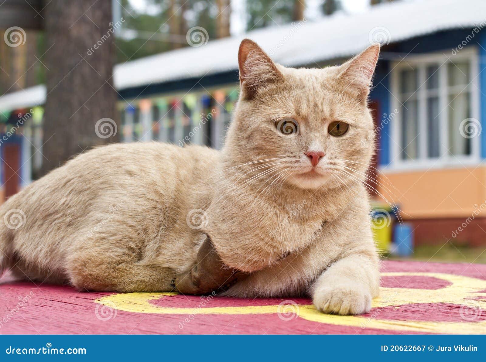 Ogiltig katt