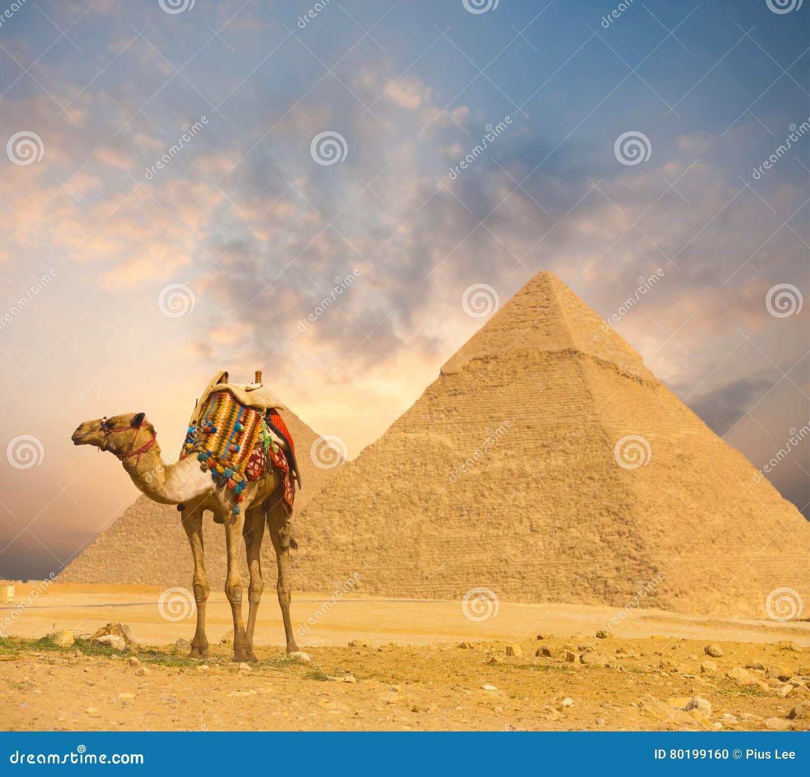 Ognistych zmierzchu Egipt ostrosłupów Wielbłądzi przedpole H