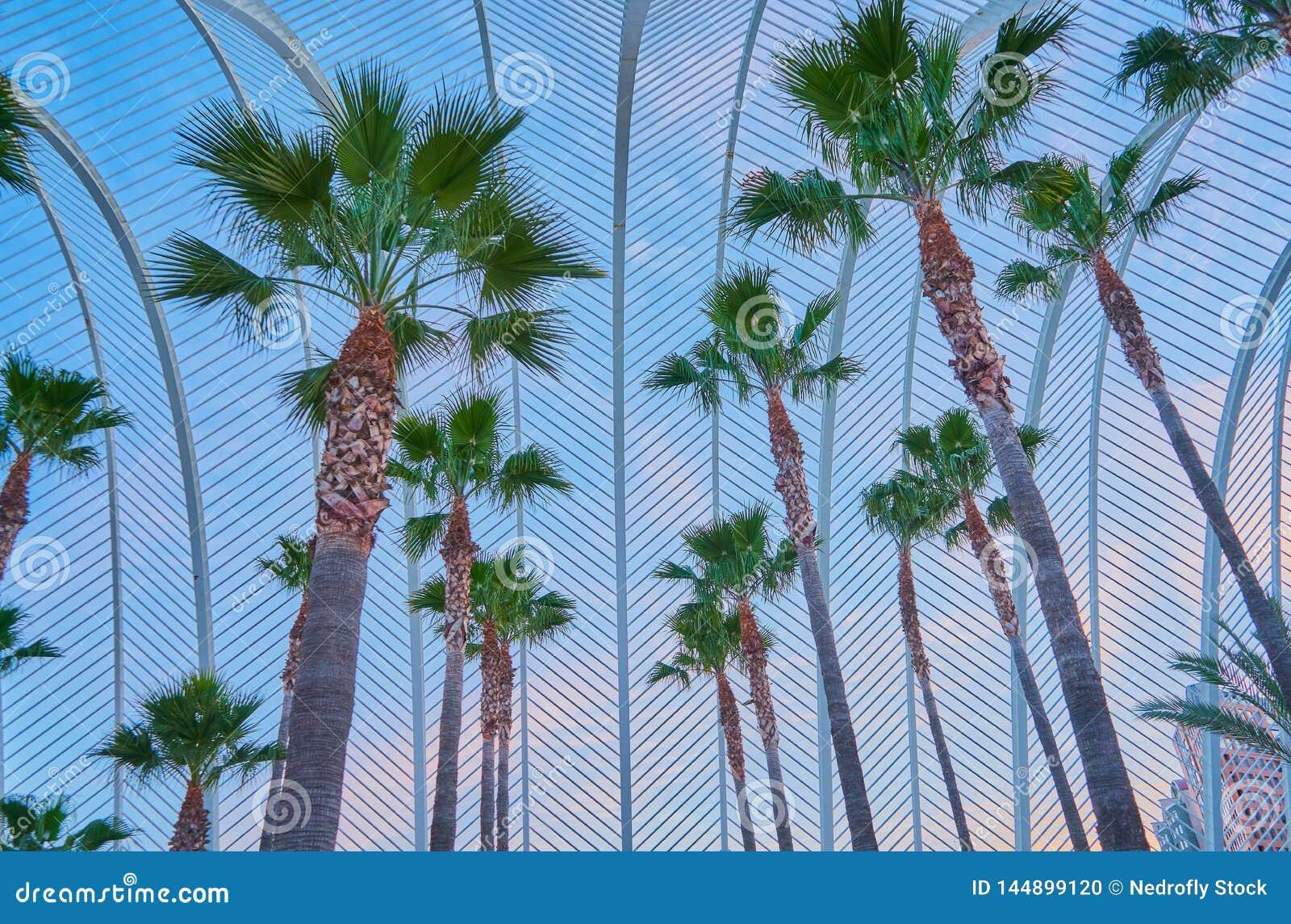Ogród z drzewkami palmowymi wśrodku sieci żelaza symuluje palmy opuszcza