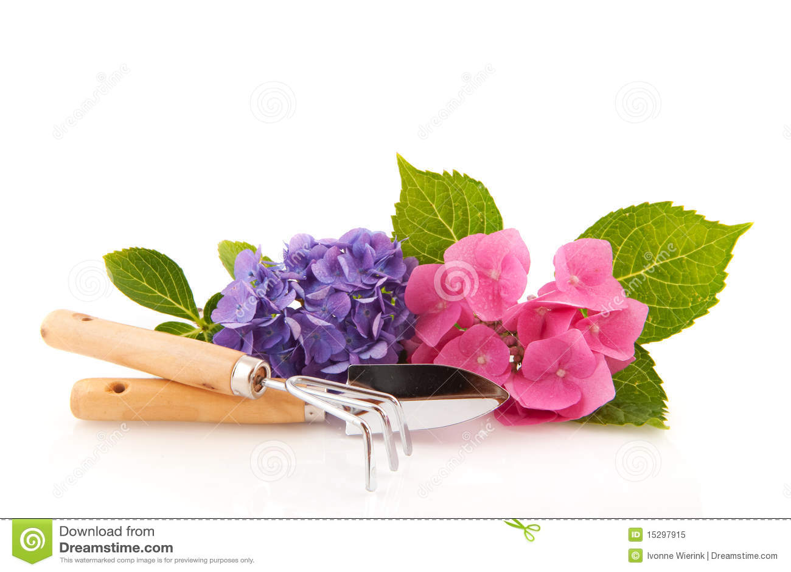 Ogrodnictwa hortensi narzędzia