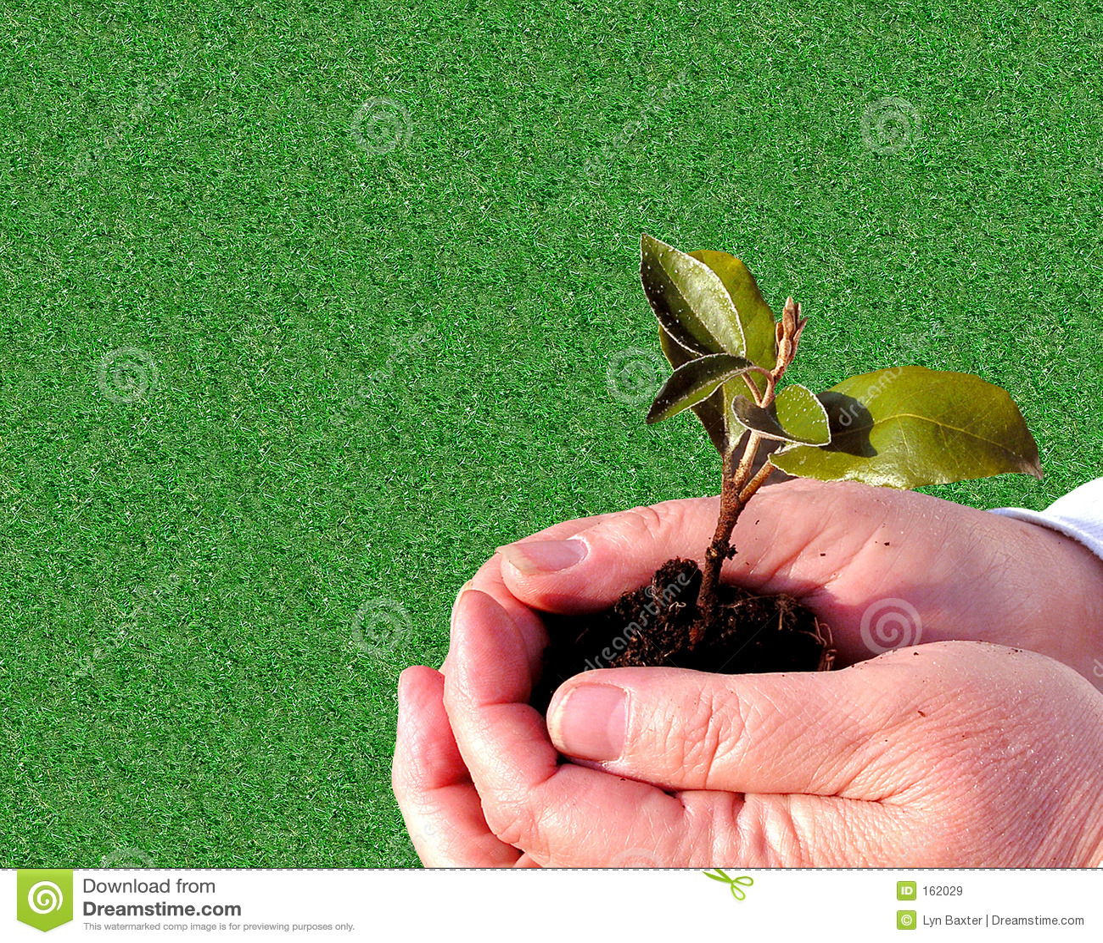Ogrodnictwo tła