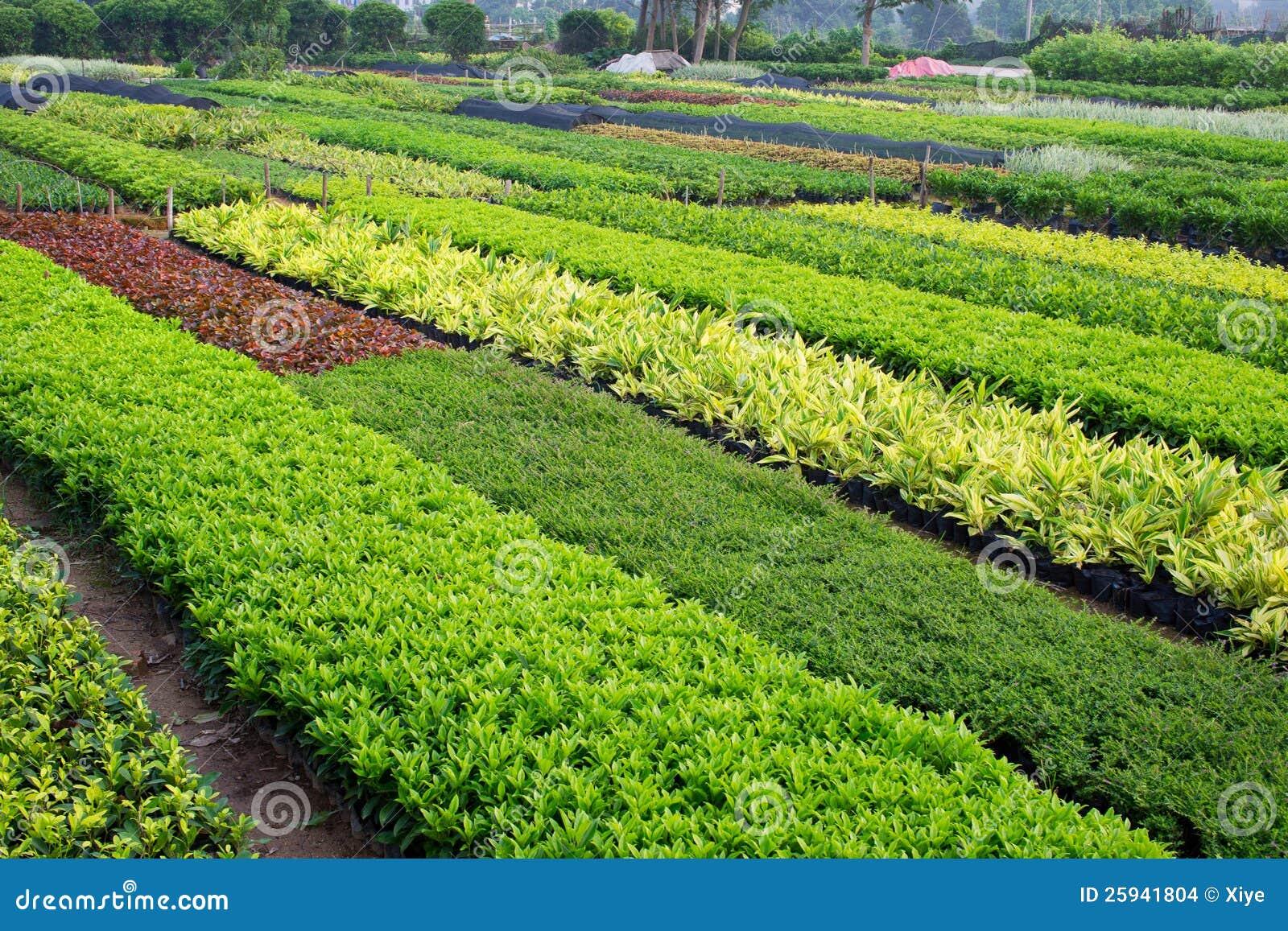 Ogrodniczy gospodarstwo rolne