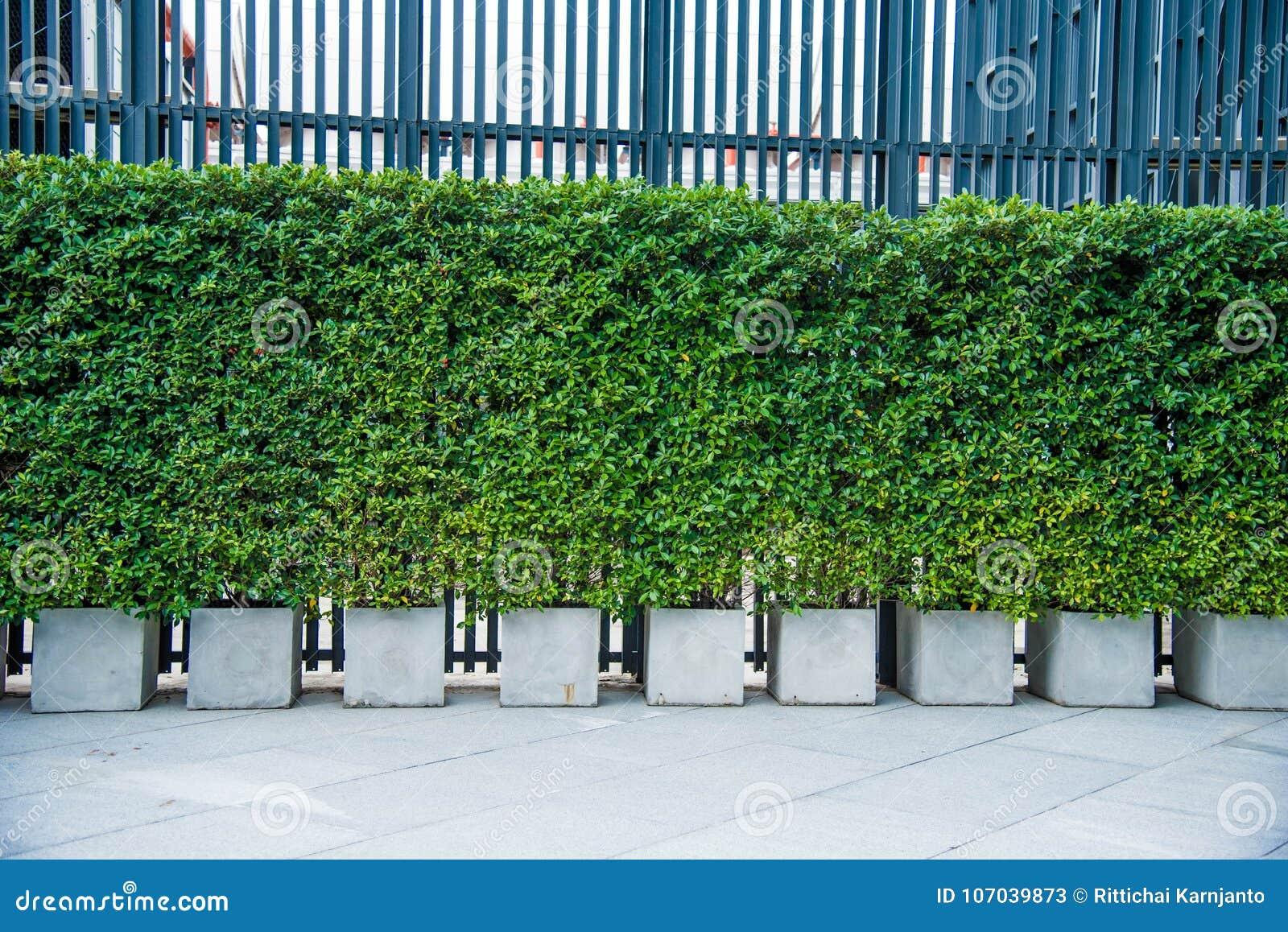 Ogrodowa dekoracja plenerowa, Zielona drzewna dekoracja