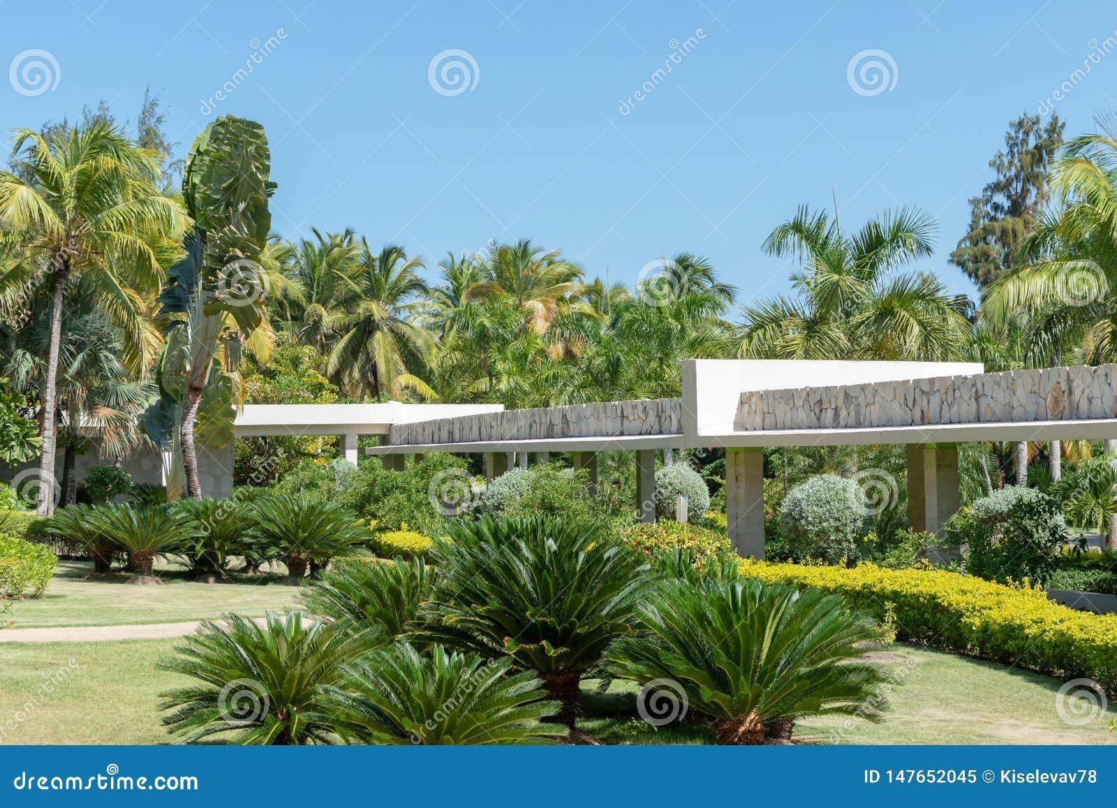 Ogrodowe ścieżki, drzewka palmowe i zielony gazon przy wschód słońca,
