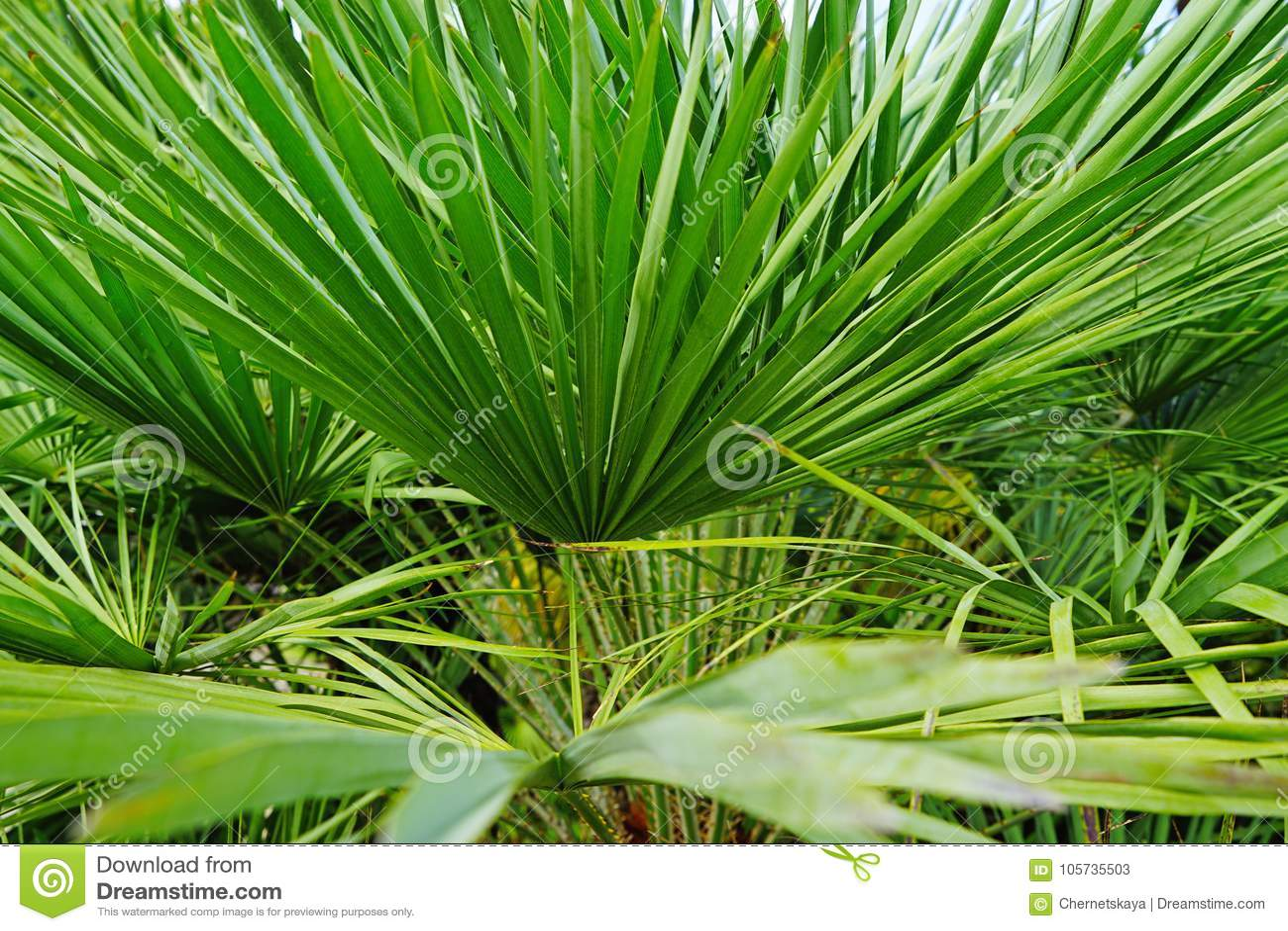 Ogrodowe palmy