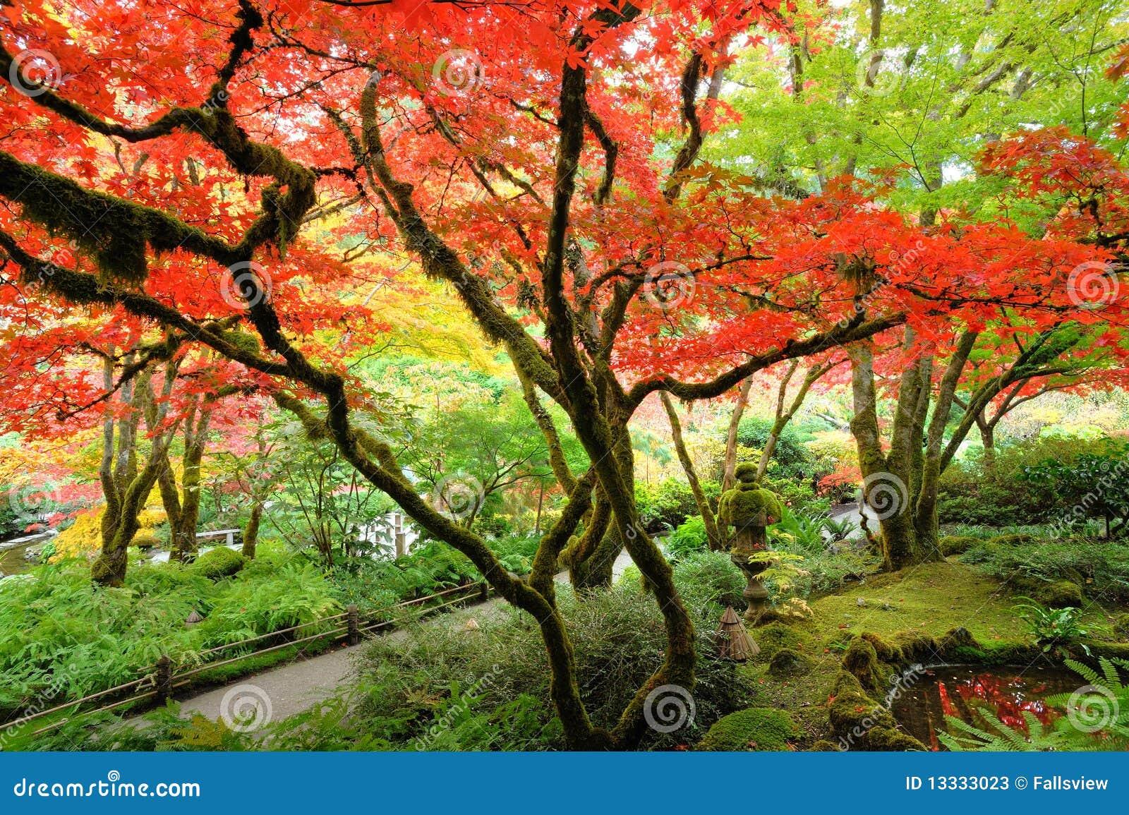 Ogrodowy jesień japończyk