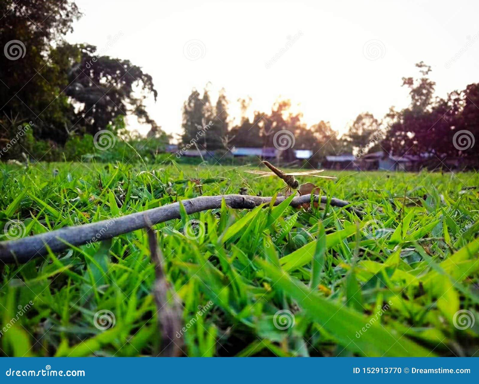 Ogrodowy zielonej trawy i słońca światło