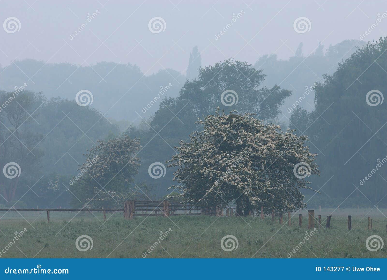 Ogrodzenie 2 drzewa