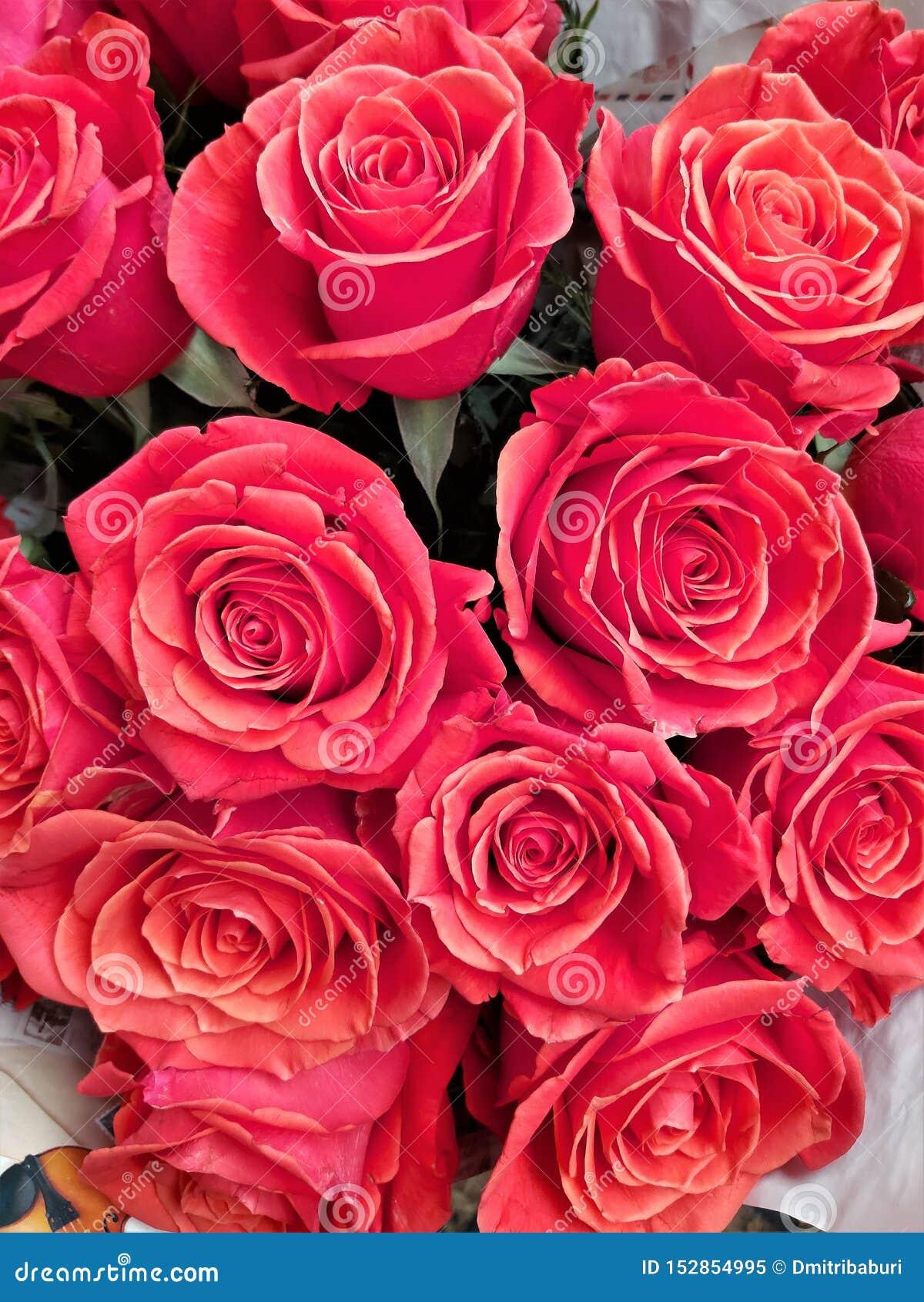 Ogromna liczba czerwone róże jako świąteczny tło