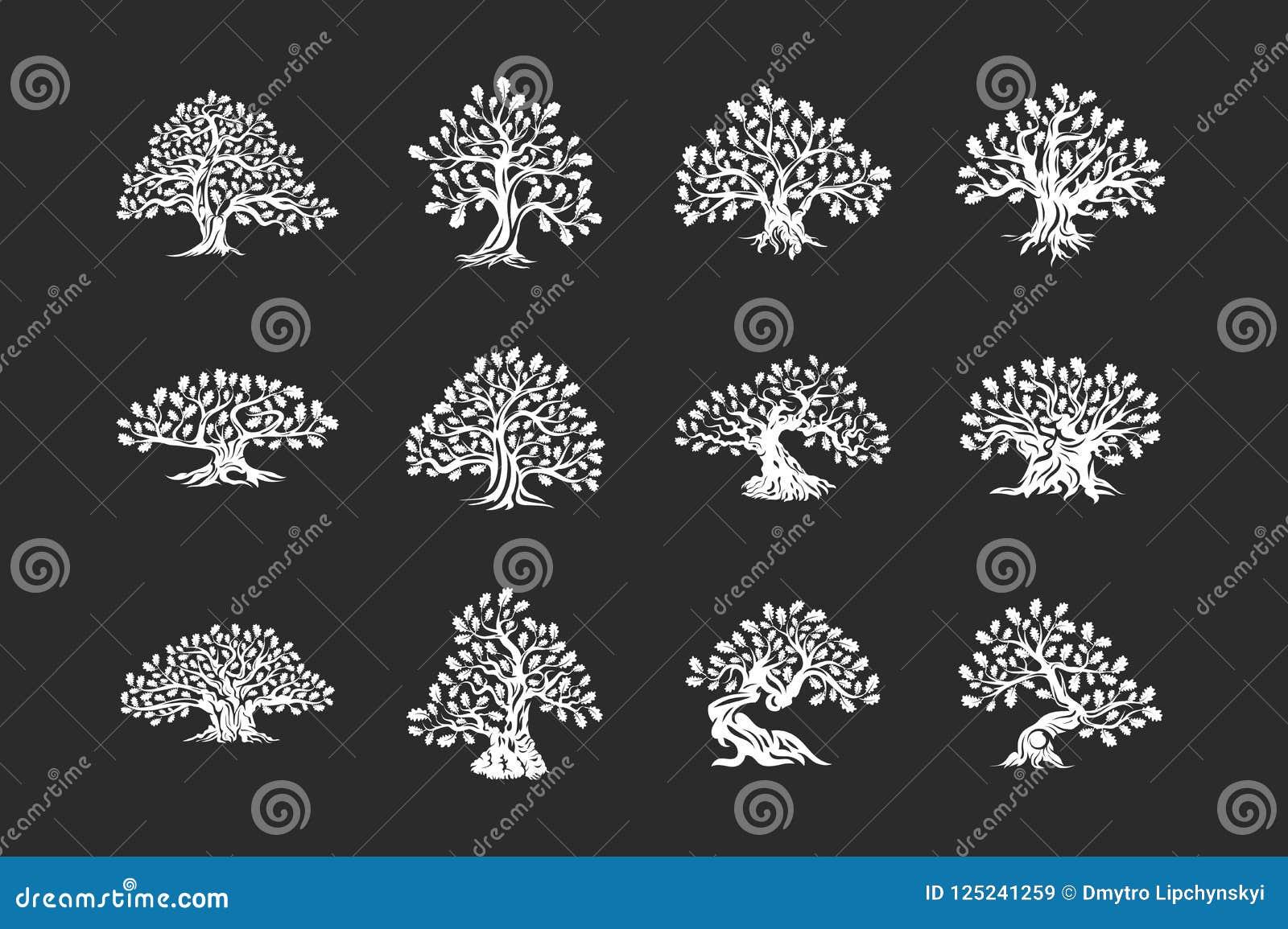 Ogromny i święty dębowego drzewa rośliny sylwetki logo odizolowywający na ciemnym tło secie