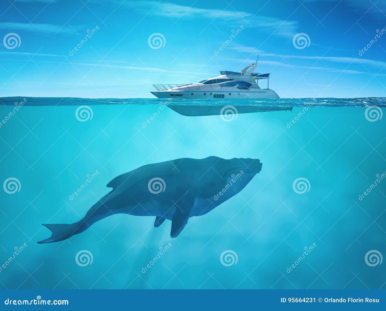 Ogromny wieloryb blisko statku wycieczkowego