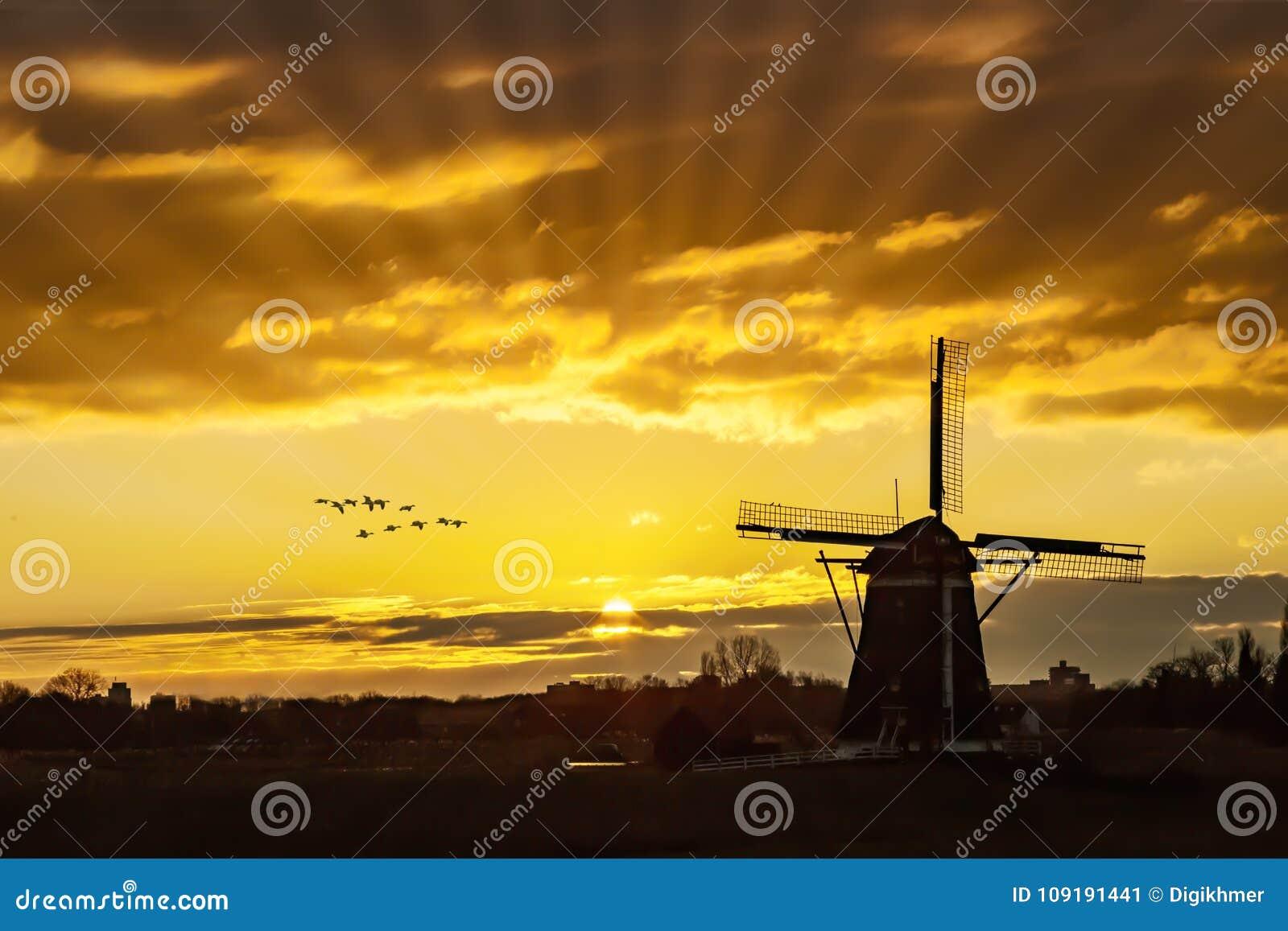 Oies volant contre le coucher du soleil sur le moulin à vent néerlandais
