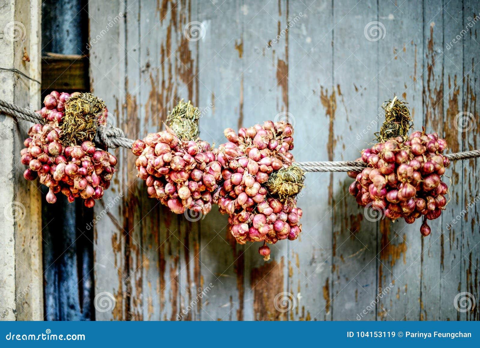 Oignon rouge accrochant sur le mur de la maison : Plan rapproché