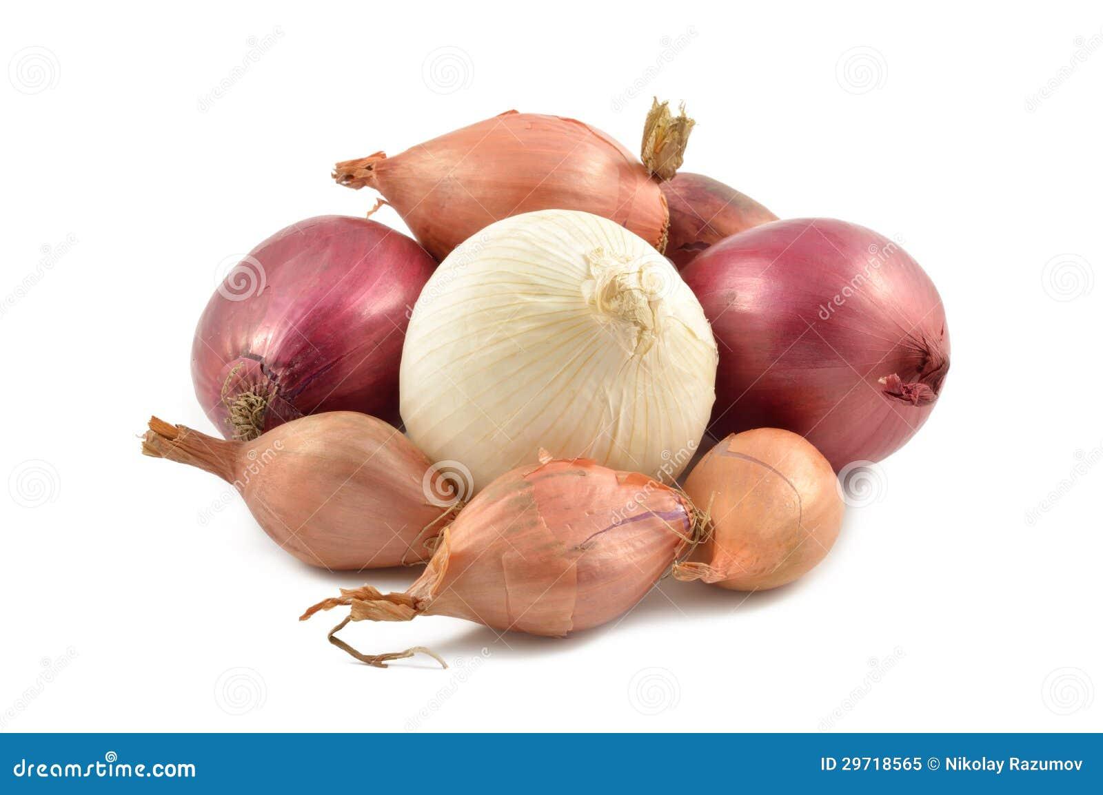 Oignons, échalotes, Ail Et Oignon Blanc Image stock - Image du échalote, simple: 29718565