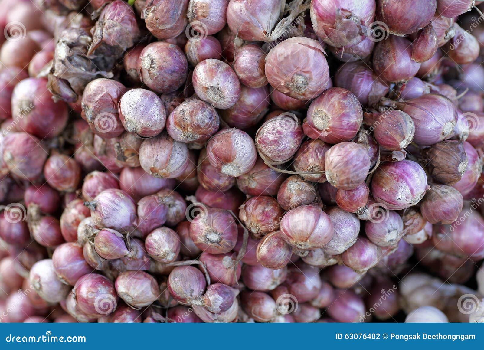 Download Oignons d'échalote photo stock. Image du herbe, oignon - 63076402