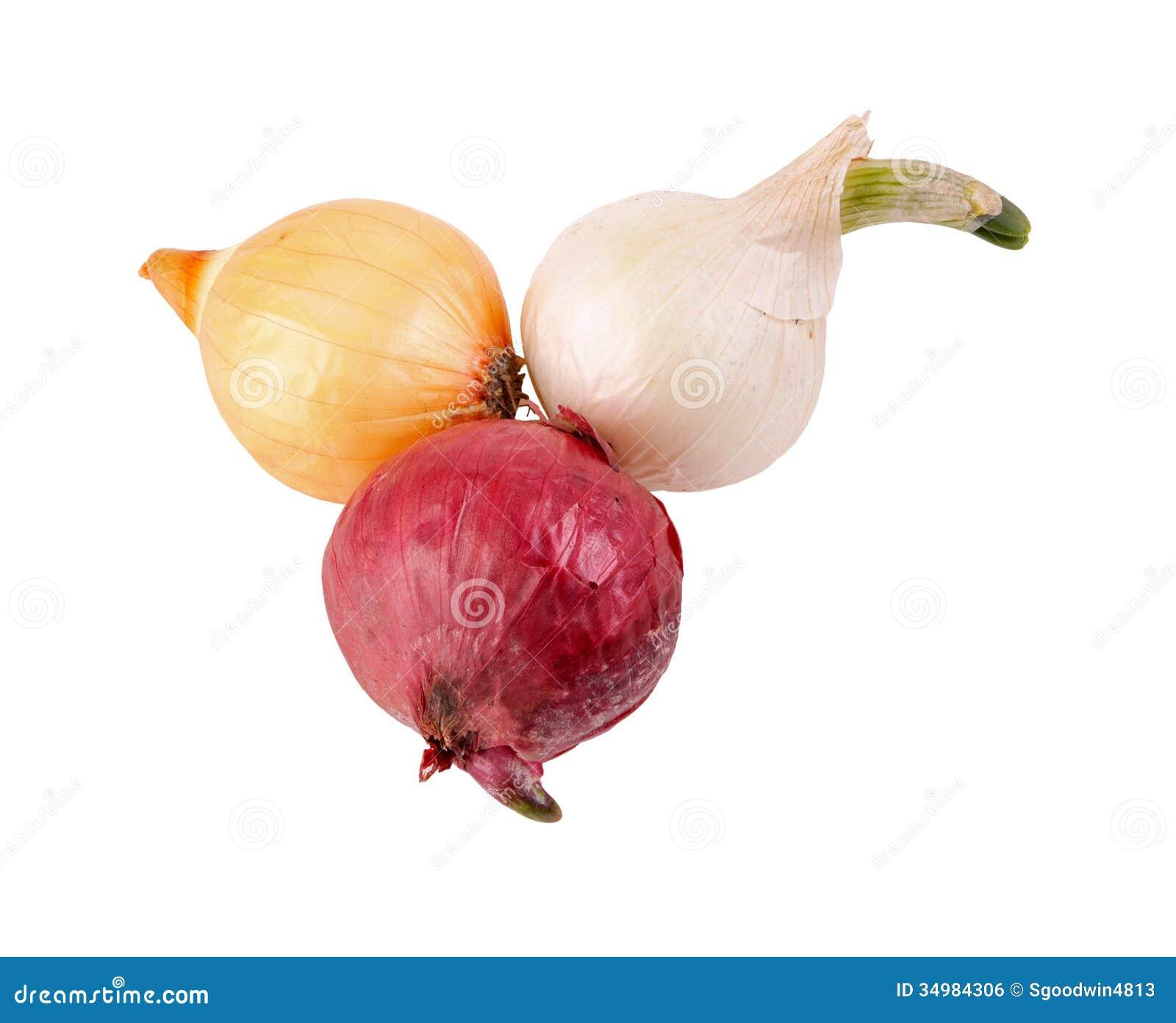 Oignon Blanc A Planter oignons d'isolement rouges, de blanc et de yelow de semence