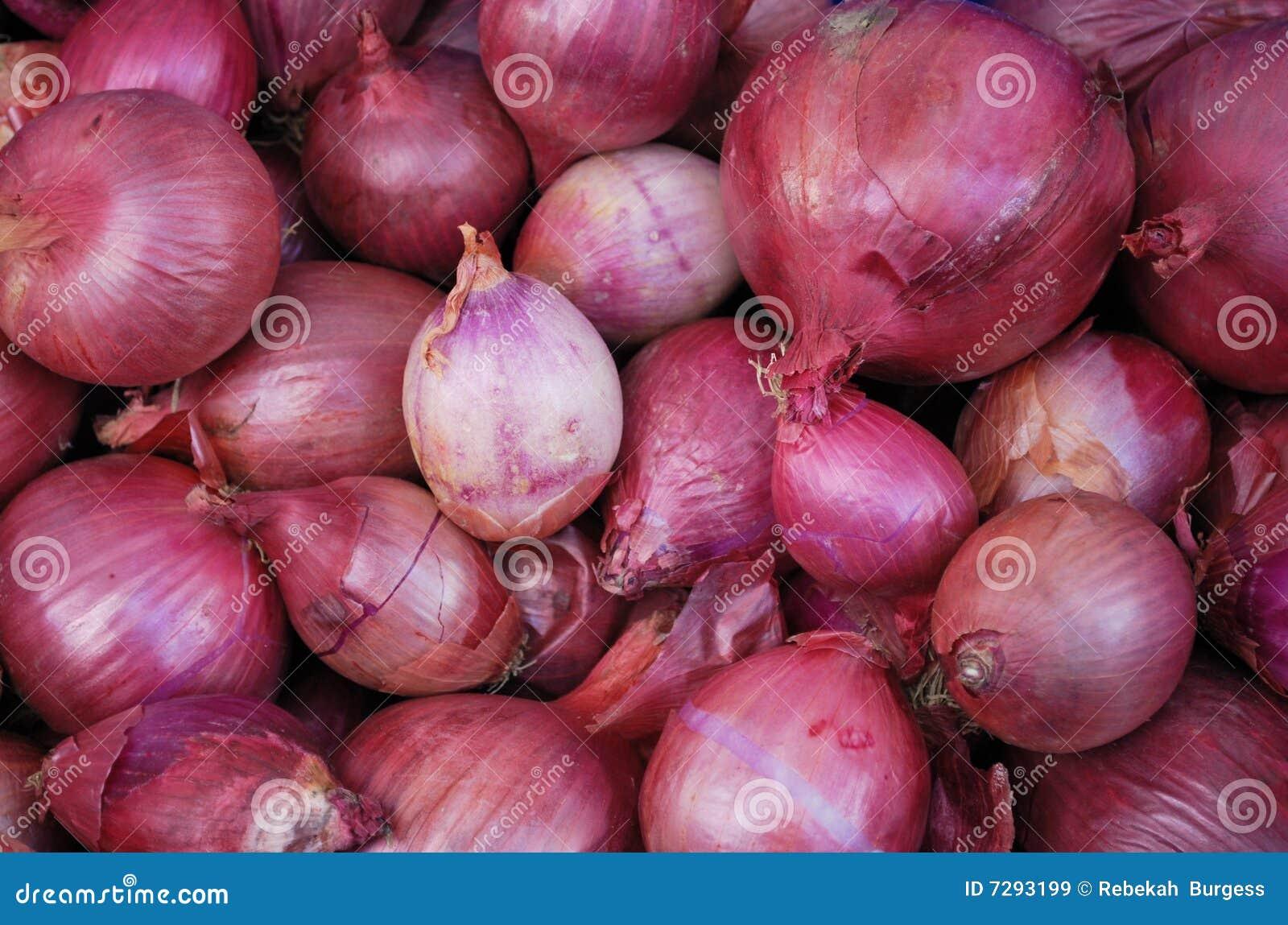 Oignons organiques rouges