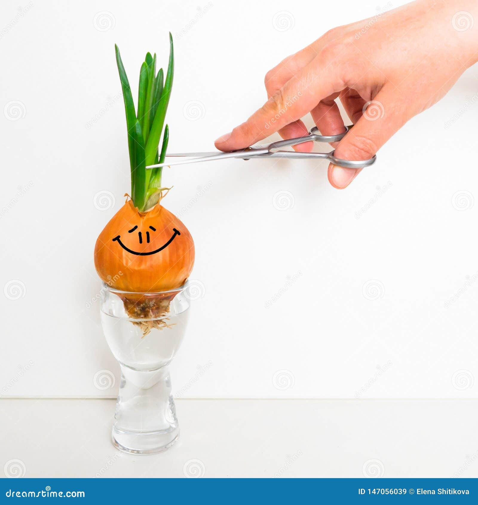 Oignons pouss?s Visage heureux